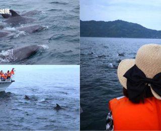 3308-日本福冈天草看野生海豚1